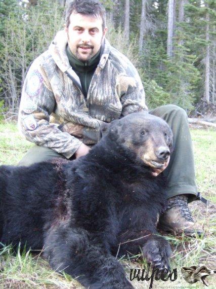 čierny medveď