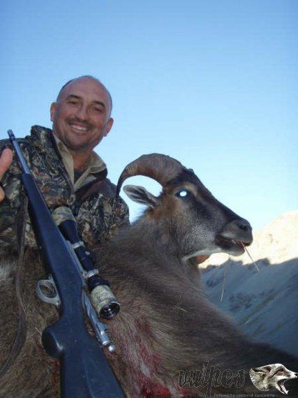 Poľovačka na Tahra v horách Zélandu